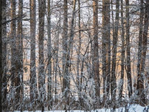 はじめて見る・・「霧氷」と「カラマツの紅葉」の共演!_f0276498_23592377.jpg