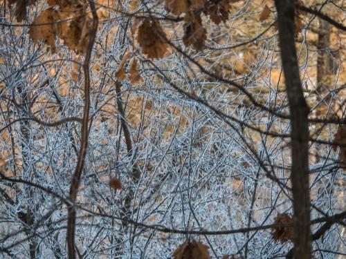 はじめて見る・・「霧氷」と「カラマツの紅葉」の共演!_f0276498_23595558.jpg
