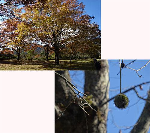 木と戯れ、秋を満喫した極上キャンプ!_c0137404_2182064.jpg