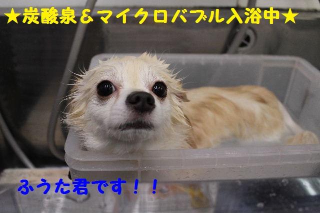 映画連発~!!_b0130018_23351441.jpg
