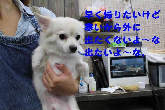 映画連発~!!_b0130018_23373385.jpg