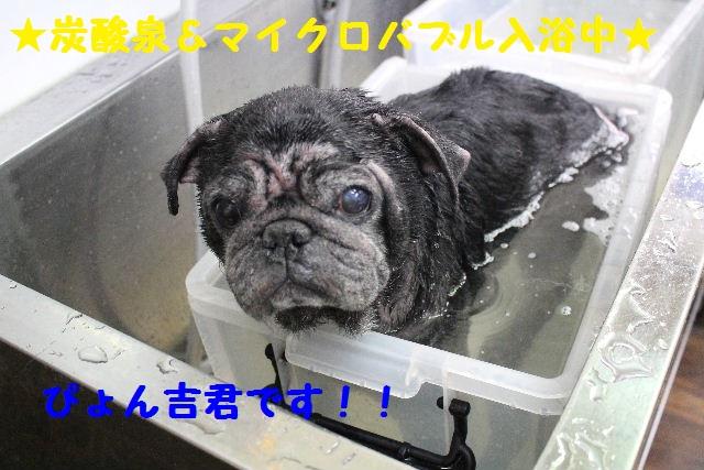 映画連発~!!_b0130018_23403683.jpg