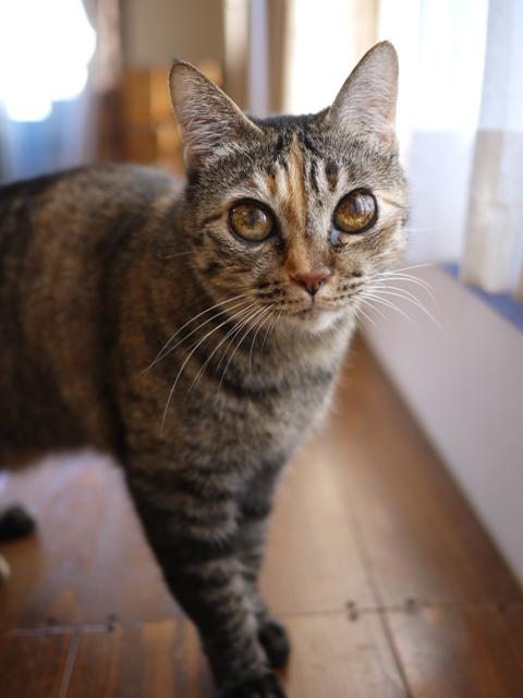 猫のお留守番 天ちゃん編。_a0143140_2021456.jpg