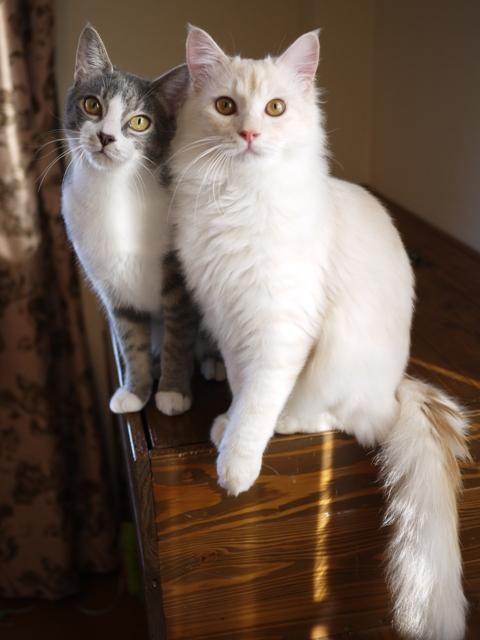 猫のお留守番 麦くん茶くん編。_a0143140_2025463.jpg