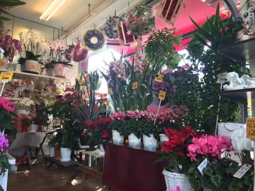 矢野とれとれ館でクリスマススワッグ教室あります。_a0152665_09425404.jpg