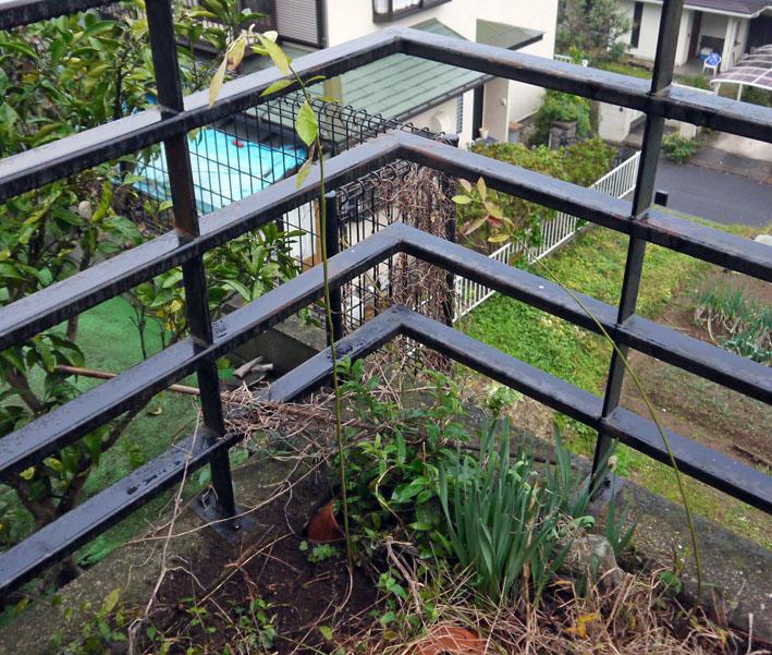 自宅の庭のブルーベリー合計6本に11・14_c0014967_825075.jpg