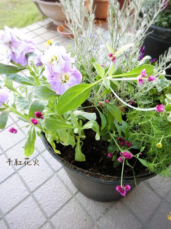 b0276777_20081303.jpg