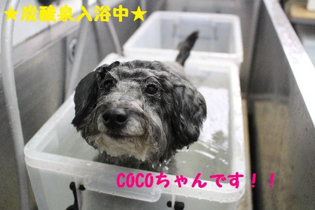 映画連発~!!_b0130018_0162829.jpg