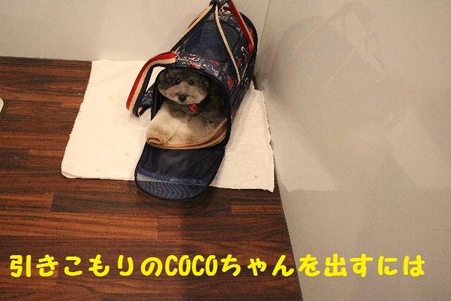 映画連発~!!_b0130018_0171640.jpg