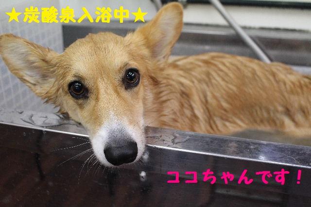 映画連発~!!_b0130018_018544.jpg