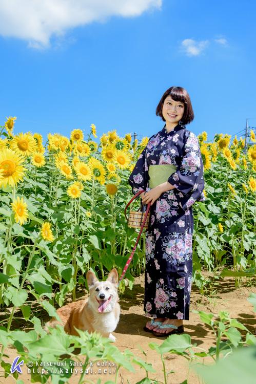ひまわり畑のアンジェちゃんとお嬢様_d0102523_1125113.jpg