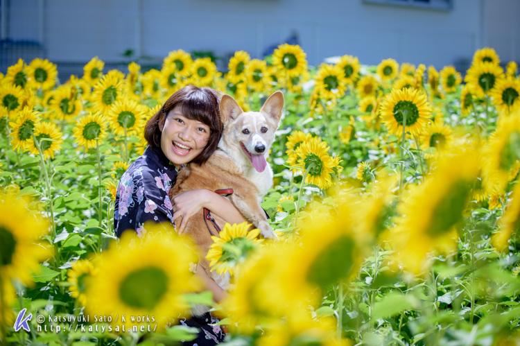 ひまわり畑のアンジェちゃんとお嬢様_d0102523_11251717.jpg