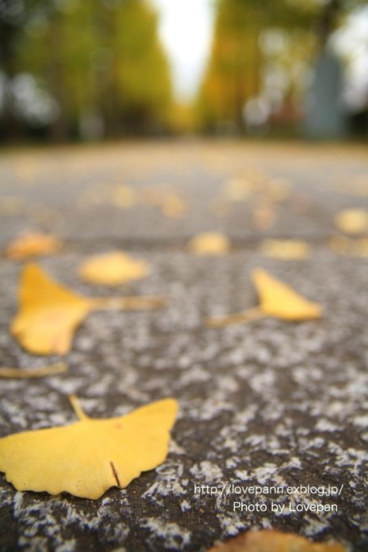 秋の銀杏並木_c0136926_16034860.jpg