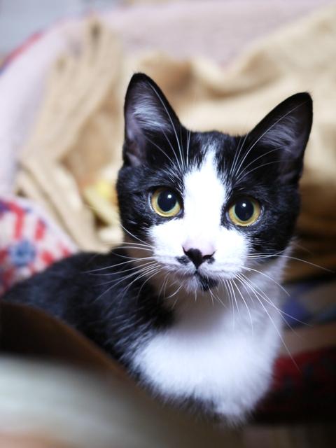 猫のお留守番 にこくん編。_a0143140_21251861.jpg