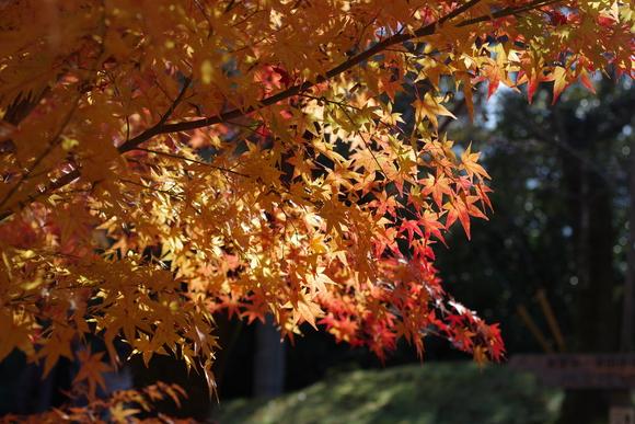 ひさびさに秋を満喫_d0227044_11111652.jpg