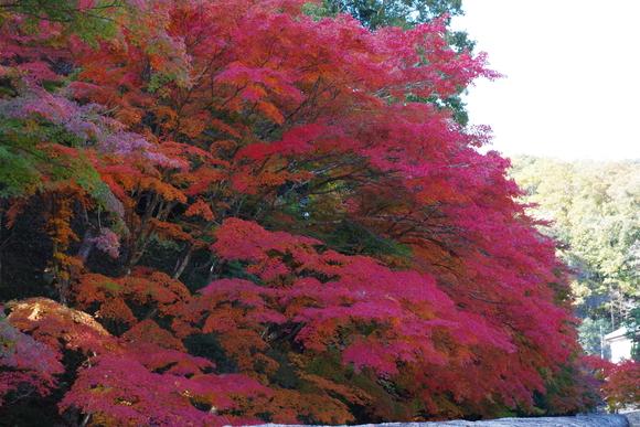 ひさびさに秋を満喫_d0227044_1115353.jpg