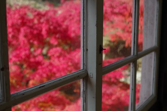 ひさびさに秋を満喫_d0227044_11193017.jpg