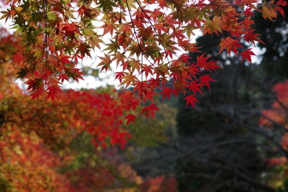 ひさびさに秋を満喫_d0227044_11232088.jpg