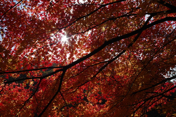 ひさびさに秋を満喫_d0227044_11243147.jpg