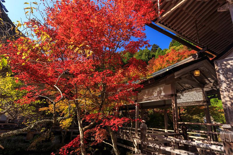 京都の紅葉2016 常照皇寺の青空と紅葉_f0155048_2343317.jpg