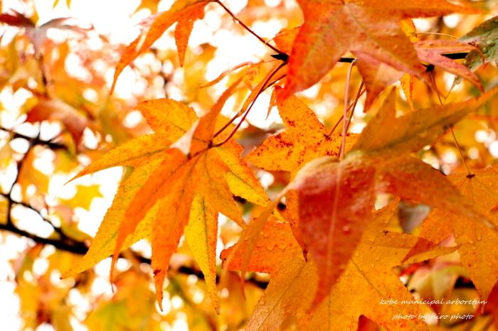 b0328557_20102236.jpg