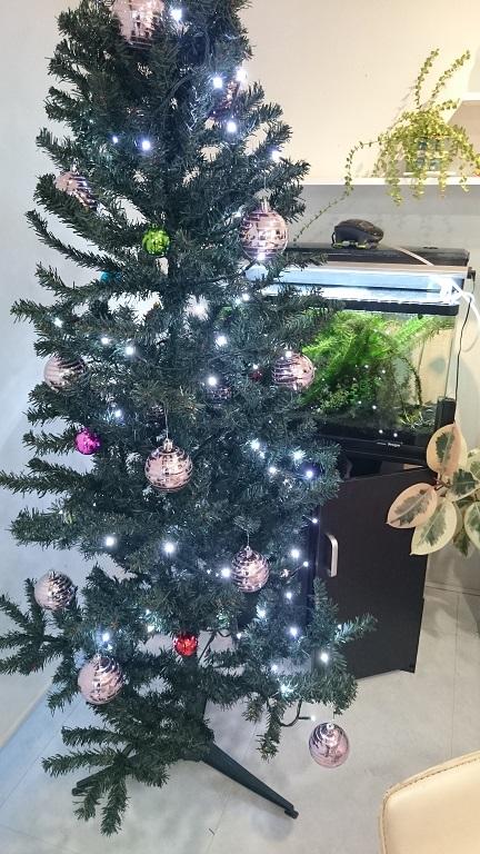 クリスマス装飾_f0172281_6382934.jpg