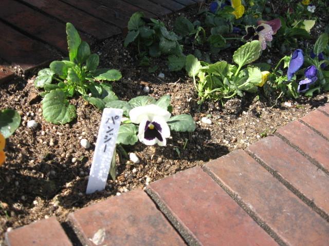 ガーデンふ頭総合案内所前花壇の植替えH28.11.16_d0338682_15202133.jpg