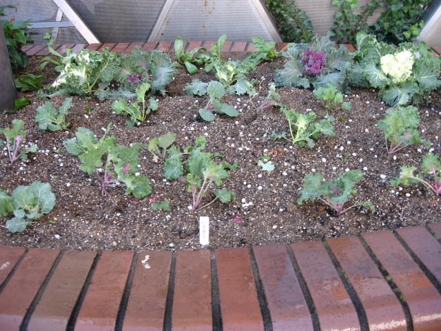 ガーデンふ頭総合案内所前花壇の植替えH28.11.16_d0338682_15204875.jpg