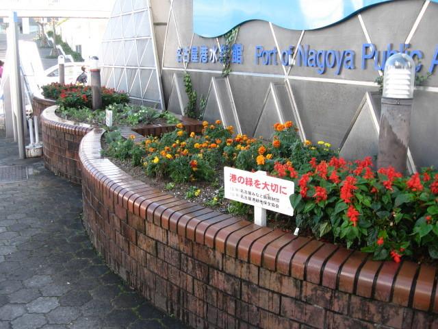 ガーデンふ頭総合案内所前花壇の植替えH28.11.16_d0338682_15251216.jpg