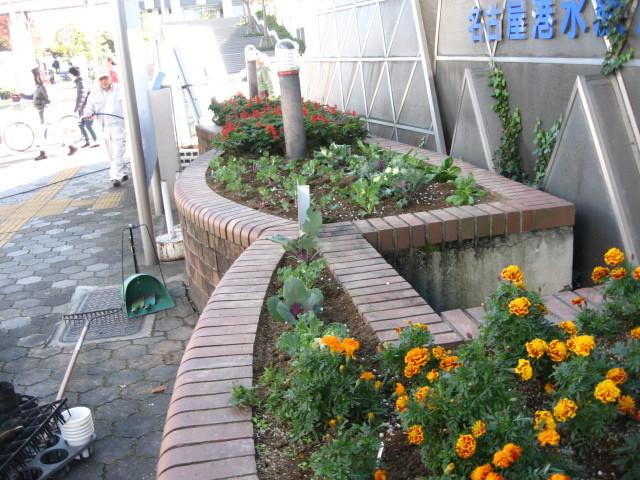 ガーデンふ頭総合案内所前花壇の植替えH28.11.16_d0338682_15271027.jpg