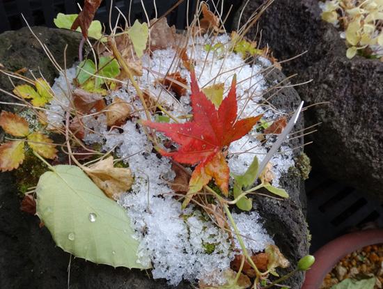初雪と冬支度、夏のモズの巣のことなど_a0136293_1037315.jpg
