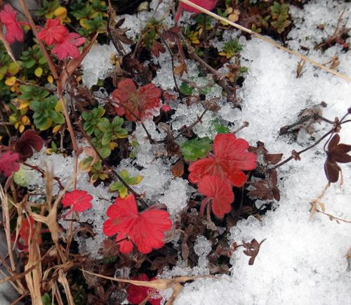 初雪と冬支度、夏のモズの巣のことなど_a0136293_10391342.jpg