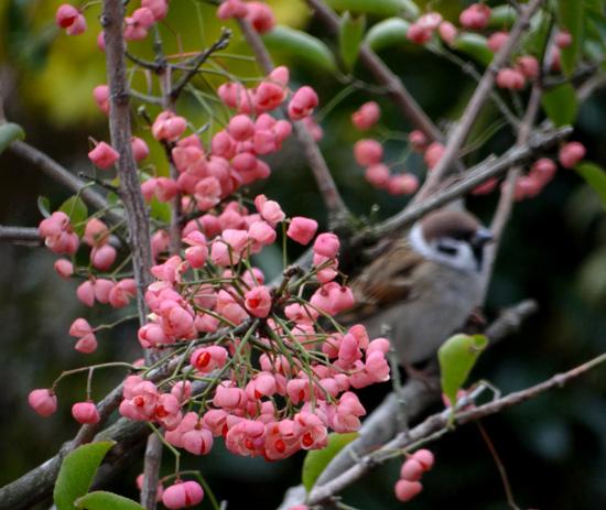 初雪と冬支度、夏のモズの巣のことなど_a0136293_1040467.jpg