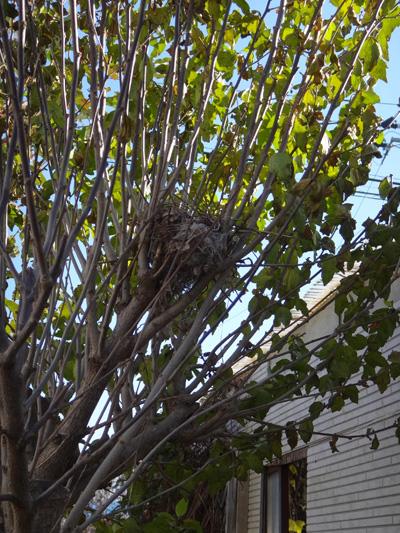 初雪と冬支度、夏のモズの巣のことなど_a0136293_10424133.jpg