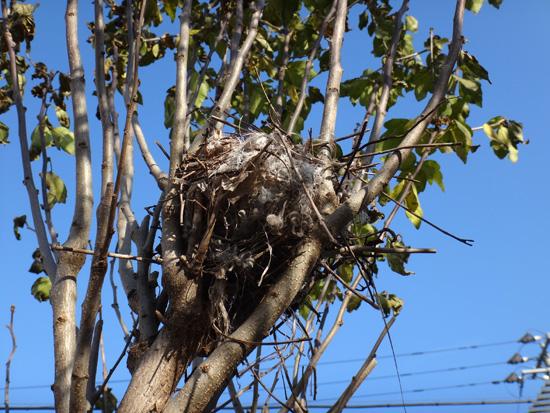 初雪と冬支度、夏のモズの巣のことなど_a0136293_10442256.jpg