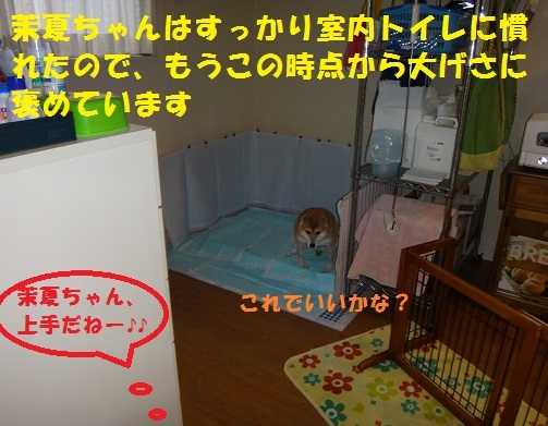 f0121712_08595900.jpg
