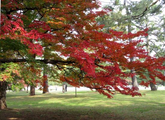 紅葉探訪10 京都御苑と上賀茂神社_e0048413_20322670.jpg