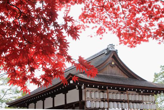 紅葉探訪10 京都御苑と上賀茂神社_e0048413_20334341.jpg