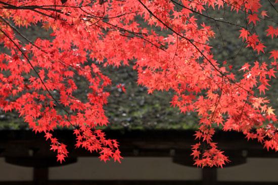 紅葉探訪10 京都御苑と上賀茂神社_e0048413_203353100.jpg