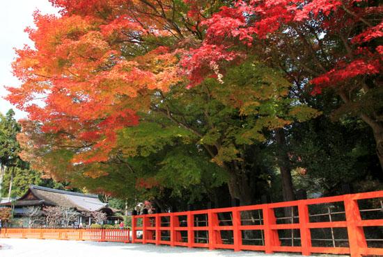 紅葉探訪10 京都御苑と上賀茂神社_e0048413_2033826.jpg