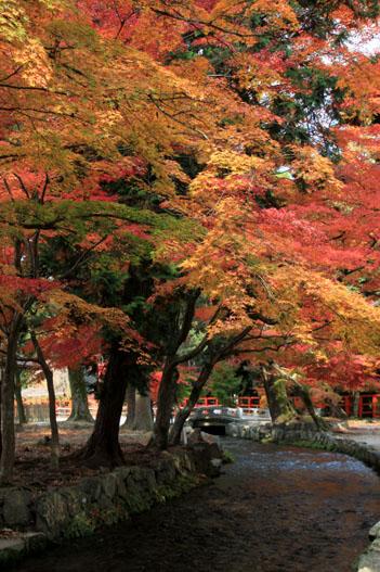 紅葉探訪10 京都御苑と上賀茂神社_e0048413_20341261.jpg