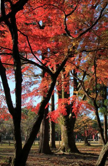 紅葉探訪10 京都御苑と上賀茂神社_e0048413_2034283.jpg