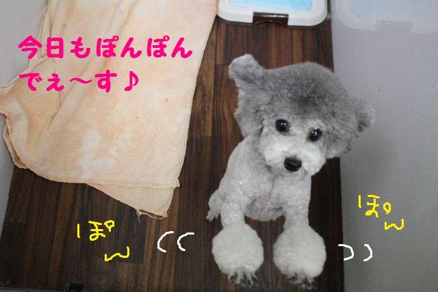 b0130018_7234365.jpg