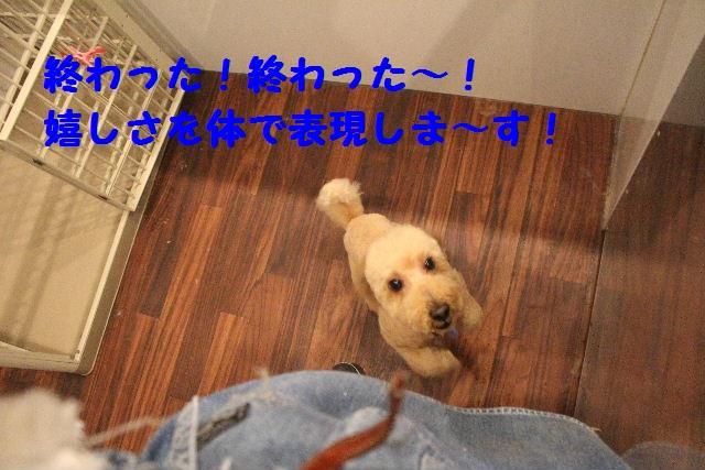 b0130018_7311889.jpg