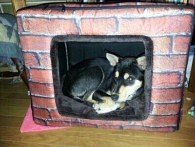 リオ(犬)の5軒目のお家_c0330749_09352147.jpg