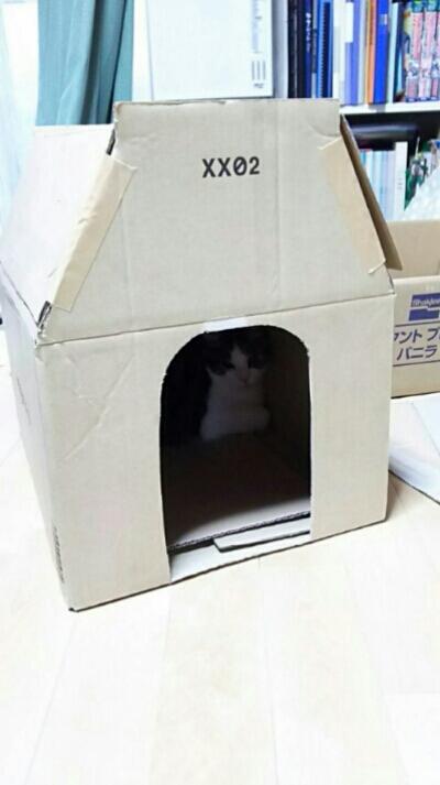 リオ(犬)の5軒目のお家_c0330749_09352409.jpg