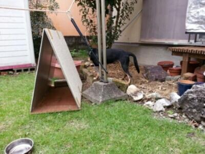 リオ(犬)の5軒目のお家_c0330749_09352675.jpg