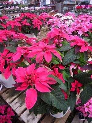 季節のお花_c0141652_13161660.jpg