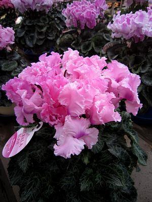 季節のお花_c0141652_13161752.jpg