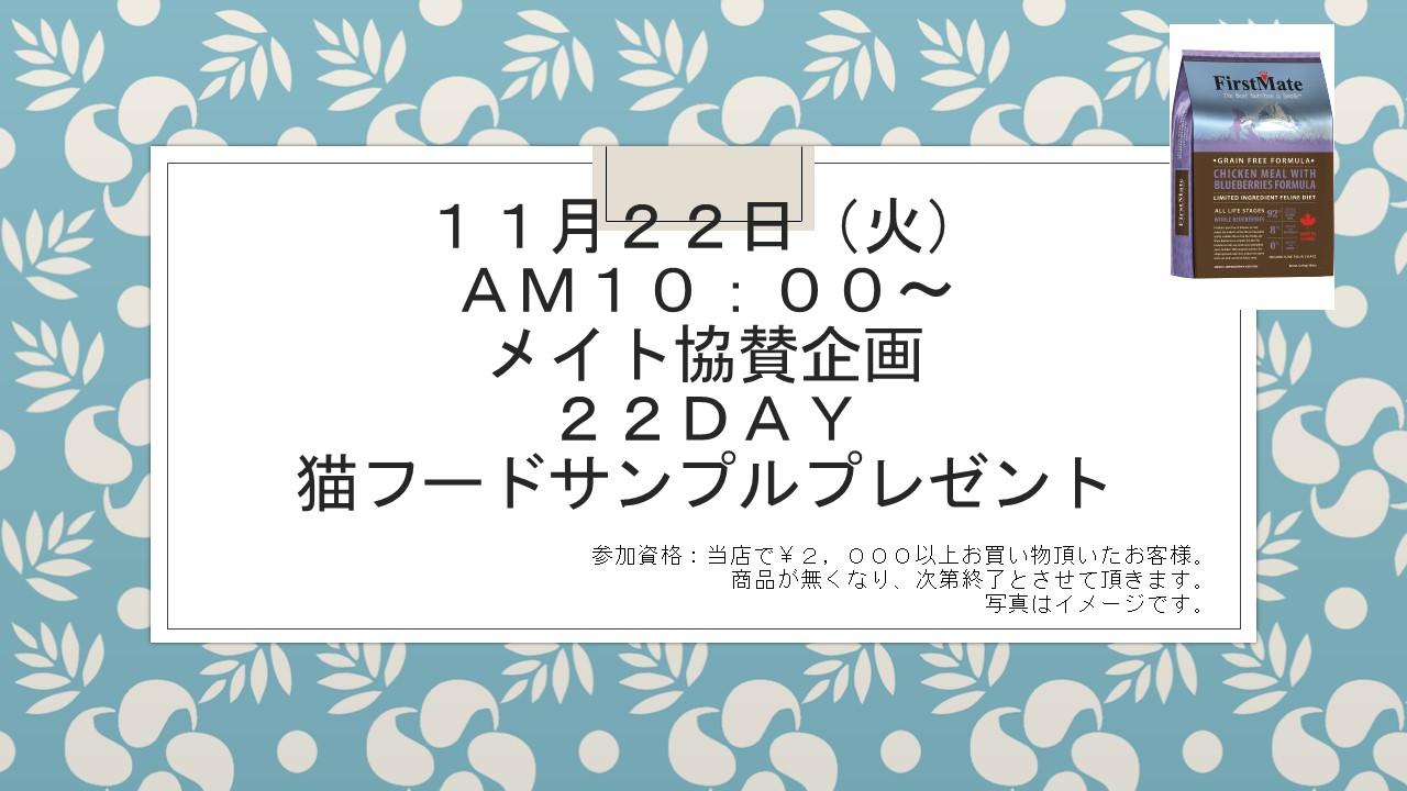 161118 猫の日イベント告知_e0181866_1352388.jpg